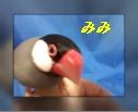 Baidu IME_2013-6-3_20-10-52.jpg